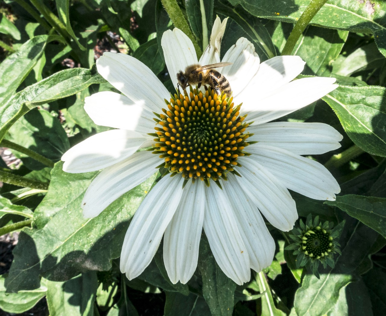 Saturday's Flower